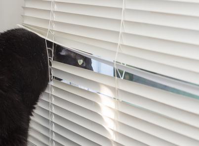 Sleuth Kitty